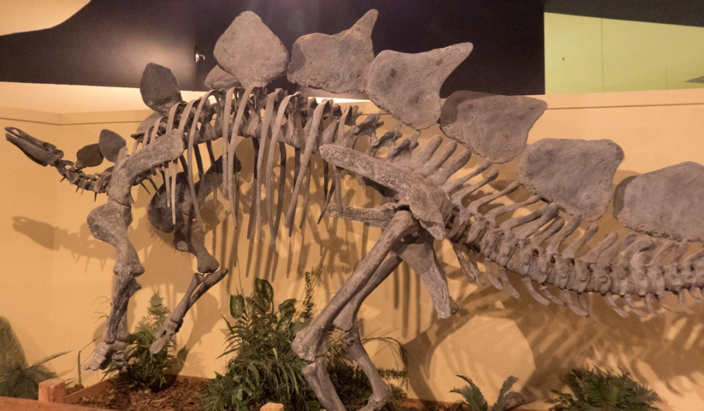 dijo-20150710-stegasaurus